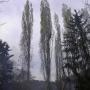 Taille élagage d'arbre