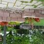 maçonnerie de bac à fleurs en moellons de grès rose