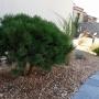 Massif-paysagé-minéral-toulouse-décoration-extérieur-jardin