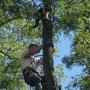Secours d'un chat perché arbre