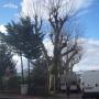 arbre à elaguer