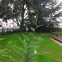 Pelouse- entretien jardin