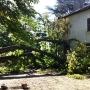Débitage d'un marronnier bi-centenaire tombé sur une maison