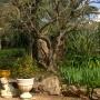 Jardin à Marseille 13011