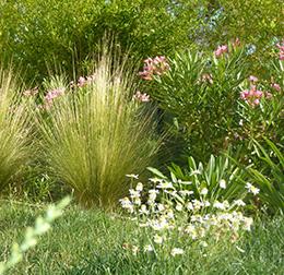 Embellissement paysagers avec BRL Espaces Naturels