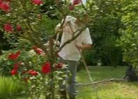 Jardinier qui ratisse