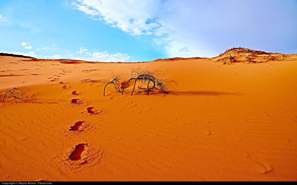 Trace de pas dans un désert