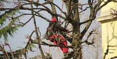 Abattage arbre bois mort 69