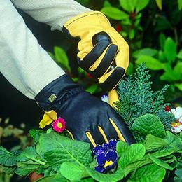 Ma main verte pour sublimer vos jardins